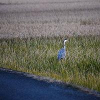 身近な野鳥散歩