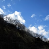 「今日の日記、冬木立の写真を撮りに行きました」