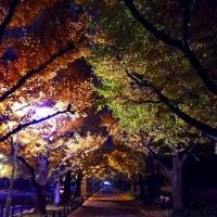 夜の神宮外苑いちょう並木