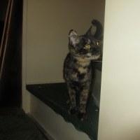 動物愛護先進国の欧米人の里親さん宅に嫁入りした2匹の猫たちの避妊手術が無事終了(^^)v