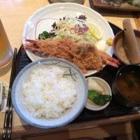 富貴蘭に魅せられて(lunch)