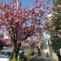 桜神宮あたりの今日の風景