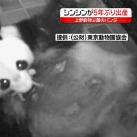 上野動物園パンダ出産
