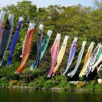 五月の空に鯉のぼり@善福寺公園です