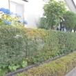 生垣の刈込