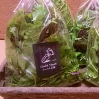 野菜日和Box  2016/11/04