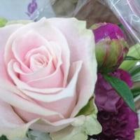 お買い得 切り花商品♪