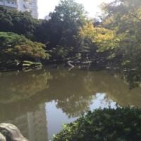 秋のバラ  旧古河庭園