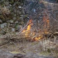 伐採樹木 火付改方