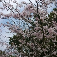パワーストーン お昼休みの花見