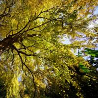 小石川植物園のおまけ