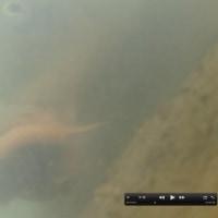 4月の櫛田川 Under Water