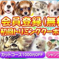 トリミング・ホテル予約受付中/犬/猫/ペット/塩釜市/多賀城市/七ヶ浜町