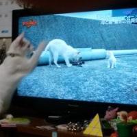 テレビの画面にじゃれてみました