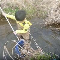 淡水魚採取 今年の初ガサは大成功!