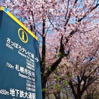 桜 2017〈2〉