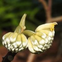 鎮国寺で、見掛けた花 (続)