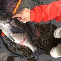 黒鯛50cm超え~~♪♪