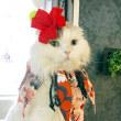 タイガーリリー・リゾートハワイアン気分なシュシュ&髪飾り