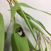 虫と卵(・・・閲覧注意)