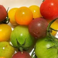 トマトの季節?