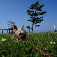 犬が草を食べるのはなぜ?