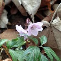 御岳山ロックガーデン風景13(他の花々)