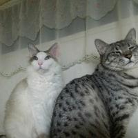 猫の日と、作り置きメニュー