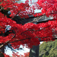 信貴山の紅葉(2)
