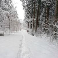 豪雪と私と阿部商店と車でクロカン(≧▽≦)