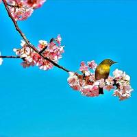 最後に眠る場所?& 頂いた春近し画像&大相撲。