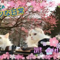 ♪梅は咲いたか~桜はまだかいな…まだまだです