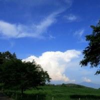 今日の空とまめ太郎と庭