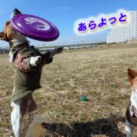 春の陽気の中で基本練習〜!