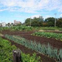 10月18日 本日は国立市農業委員会として農地利用状況調査を行いました