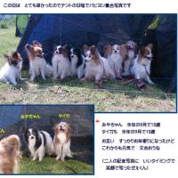 JKC アペックス・九州ブロック 2017.04.15・16