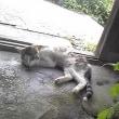 嘘みたいだろ。このネコ死んでるんだぜ(嘘だけど)