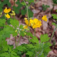 生田原の野の花