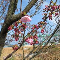 いい春日和です!