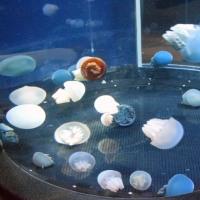 新江ノ島水族館・クラゲの宇宙
