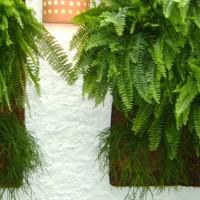 緑の展示法-バーティカル・ガーデン(垂直庭園)