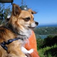太平洋を見つめるマドロス犬