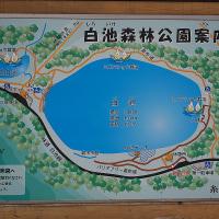 糸魚川市白池の紅葉2016(1)