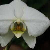 冬の植物園36(ヨシ)