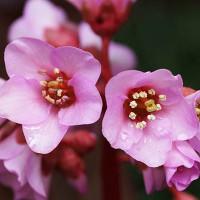 18日の京都府立植物園から ( 早春だより )