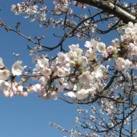 春ですね!