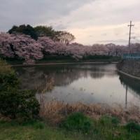 桜咲く日に