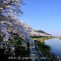 一目千本桜№1