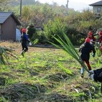 12/2(金)サトウキビの収穫をしました。