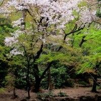 石神井公園 冬から春へ